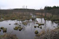 Рязанские стражи правопорядка спасли тонущего в болоте грабителя