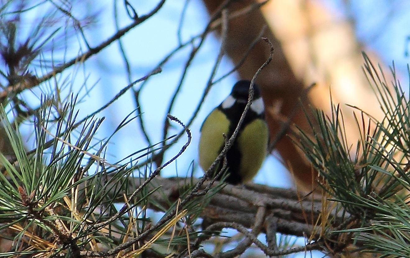 Птицы тамбова фото