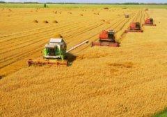 Липецкие растениеводы вырастят продукции на сумму 44 млрд рублей