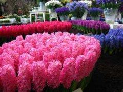 В Тамбове на днях откроется фестиваль цветов