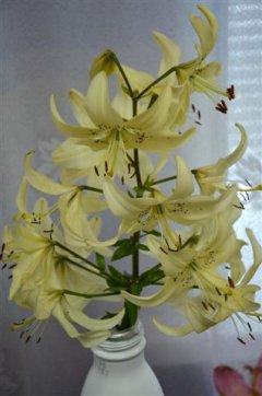 В Рассказово открылась выставка лилий