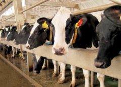 В Тамбовской области в этом году произведут 228 тысяч тонн молока