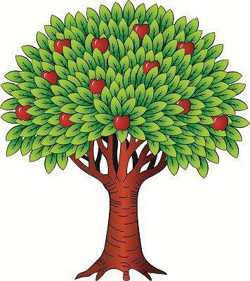 Деревьев фото почки