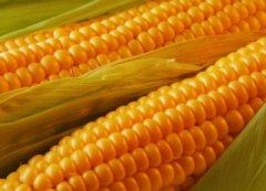 Тамбовская область на третьем месте в ЦФО по сбору зерновых