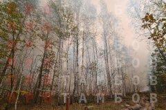 В Тамбовской области полыхают пожары