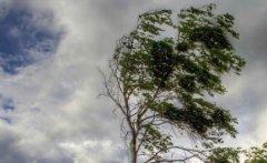 Ожидается усиление юго-восточного ветра