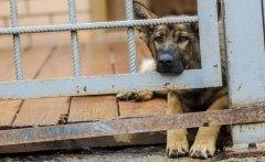 В Тамбове приступят к отлову собак