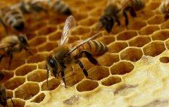 В Тамбовской области создан кооператив пчеловодов