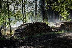Горожане: «В пригородном лесу происходит тотальная вырубка леса»