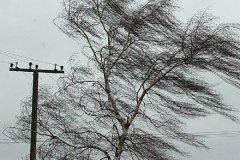 Тамбовская область снова оказалась в зоне ненастной погоды