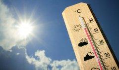 Аномальная жара установится в Тамбовской области