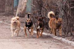 За 7,5 млн рублей в областном центре будут отлавливать собак
