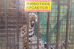 В Тамбове закрыли единственный зоопарк