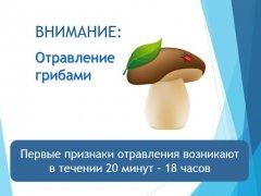 В Тамбовской области зарегистрировано 8 случаев отравления грибами