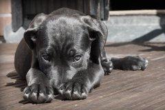 Собаки продолжают плодиться и терроризировать тамбовчан