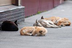 Бездомных собак отпускают в среду обитания, откуда изъяли